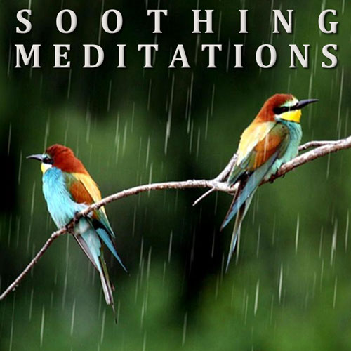 Soothing Meditations -Birds in the Rain